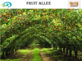 fruitallee