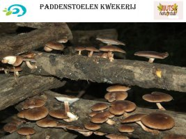 paddenstoelenkwekerij