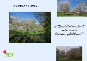 voorjaar-2020-bloesem-002