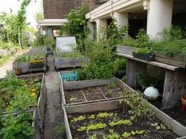 stadslandbouw5