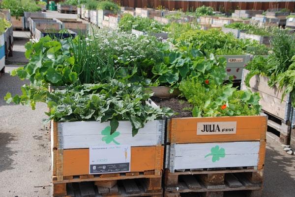 urban farming (1)