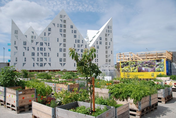 urban farming (4)