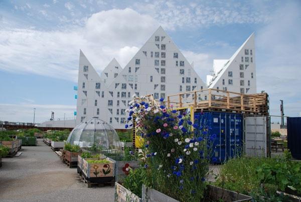 urban farming (5)