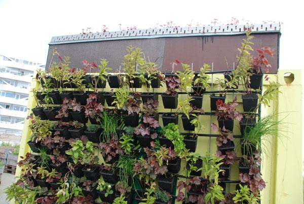 urban farming (8)