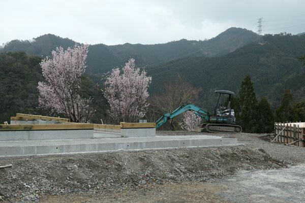 De sakura (Japanse Kers) staat symbolisch te bloeien op het terrein van het nieuwe Zero Waste Lab waar het trash-hotel komt te staan.